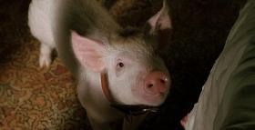 babe_pig_in_the_city_1998_blu_ray_movie_review