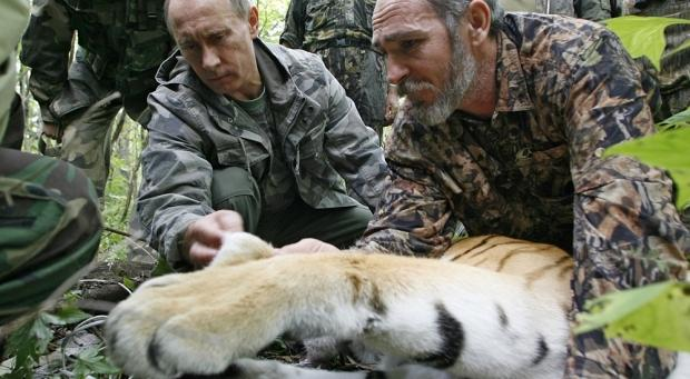 vladimir_putin_releases_siberian_tiger_into_wild_mauls_goats_in_china_01