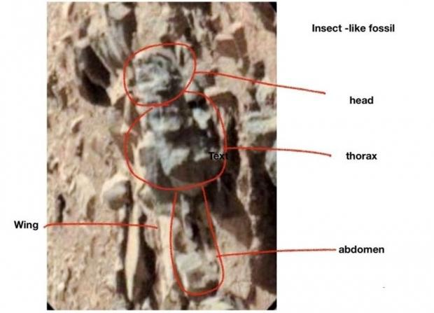 68913_03_insects-mars-ohio-scientist-claims-nasa-images-show-life.jpg